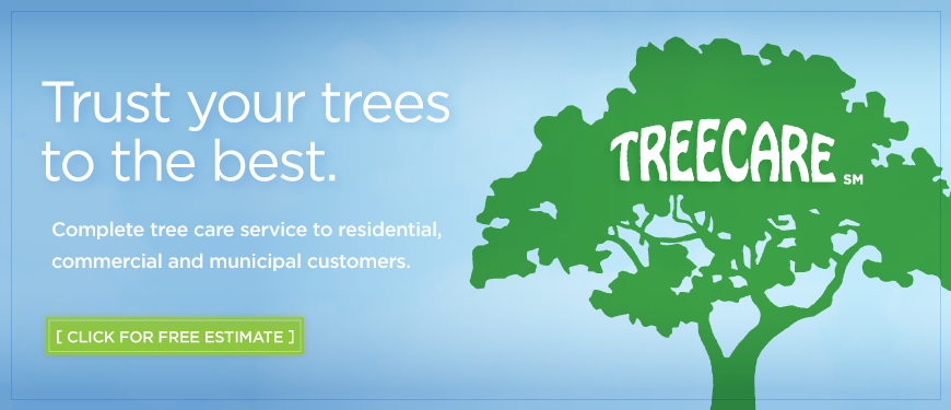 treecare-inc-tree-services